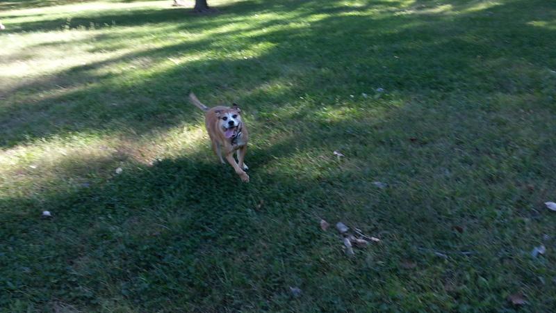 My Barfy Little Dog