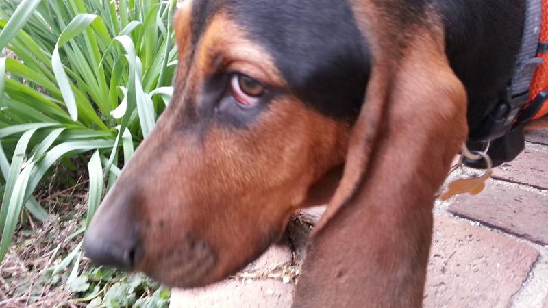Treats for my Diabetic Dog?