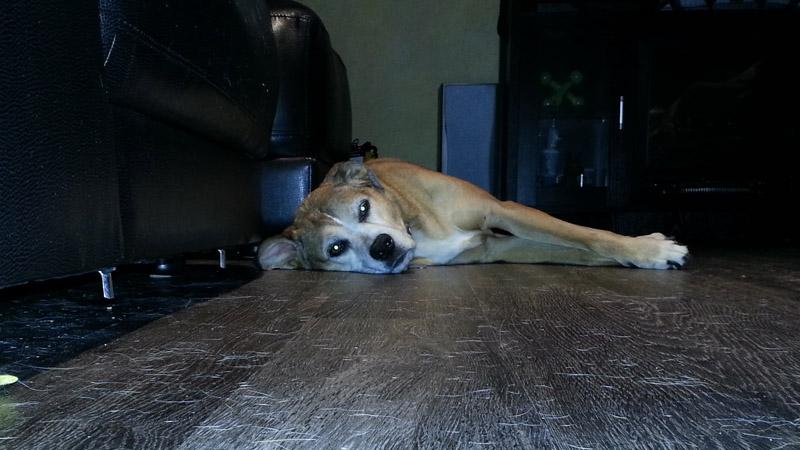 Advocate Pet Test Meter